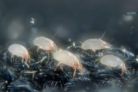 plagas de oficina ácaros