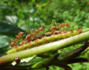 control-de-plagas-hormigas